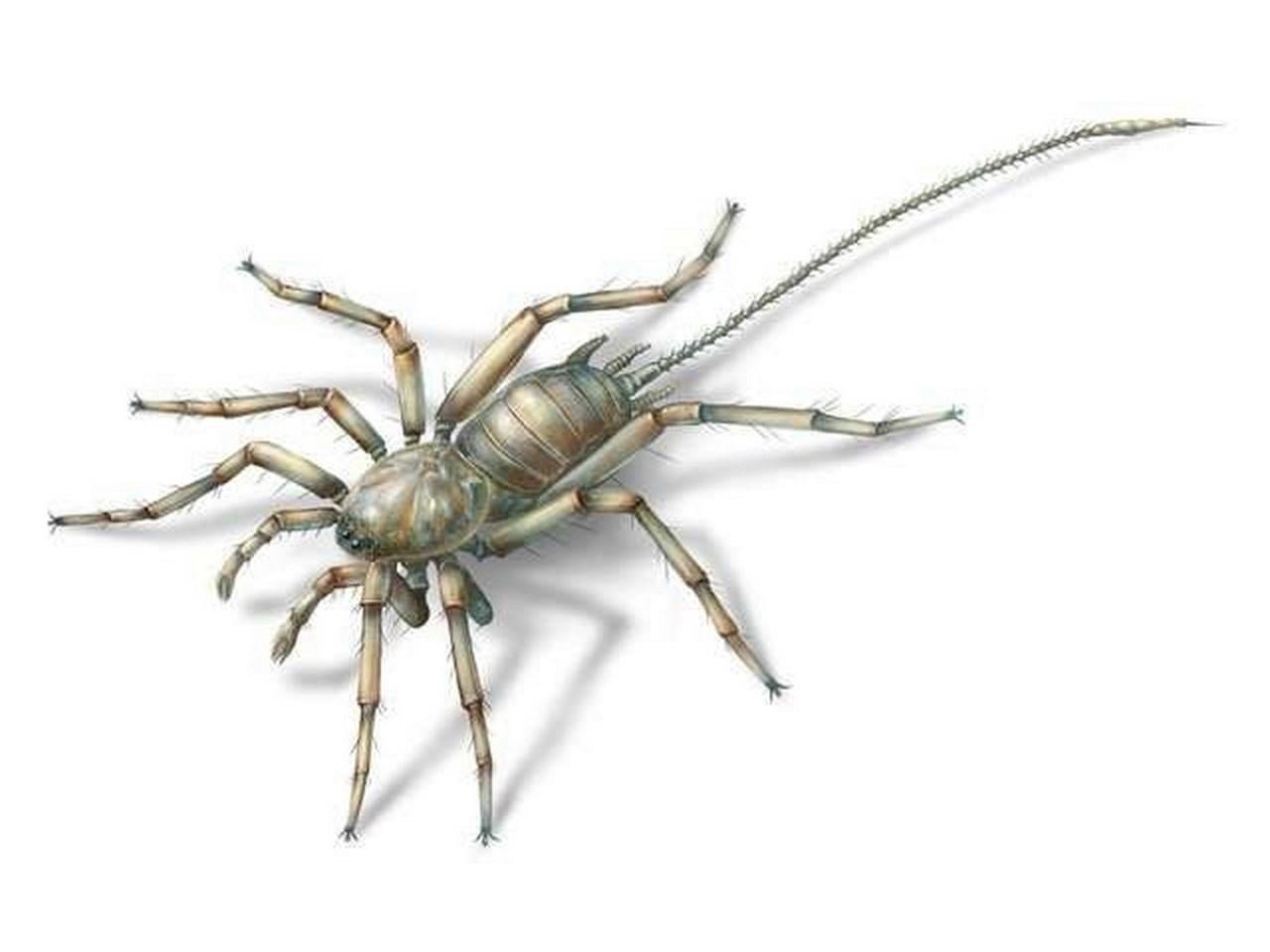Four specimens of Chimerarachne have been recovered